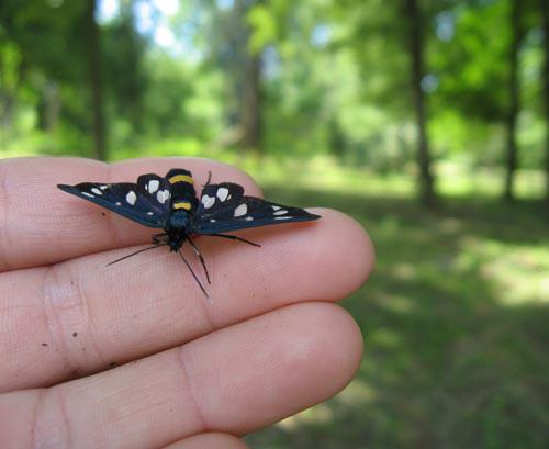 Pillangó pihen a kezemen