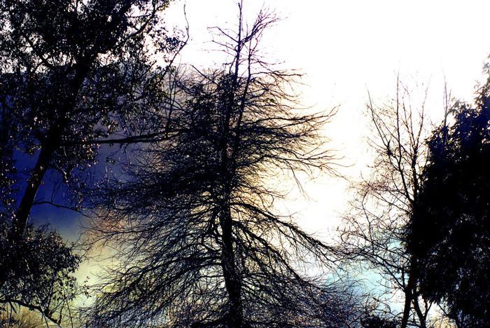 Erdőben 1.