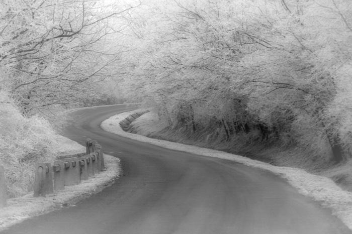 Fehér erdő