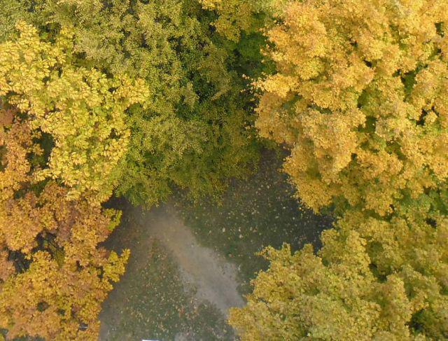 Bársonyos ősz
