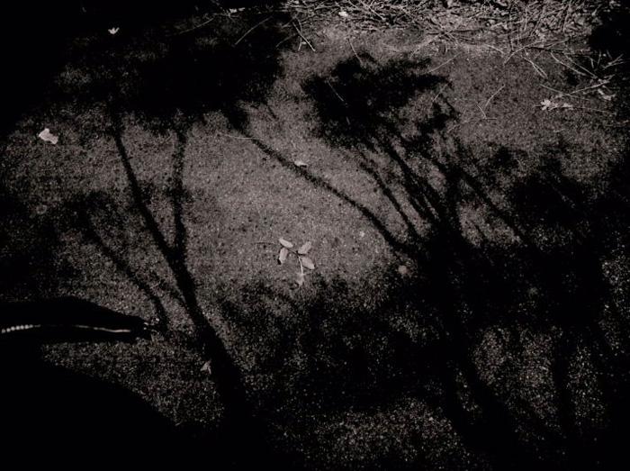 éjjeli járda-fák