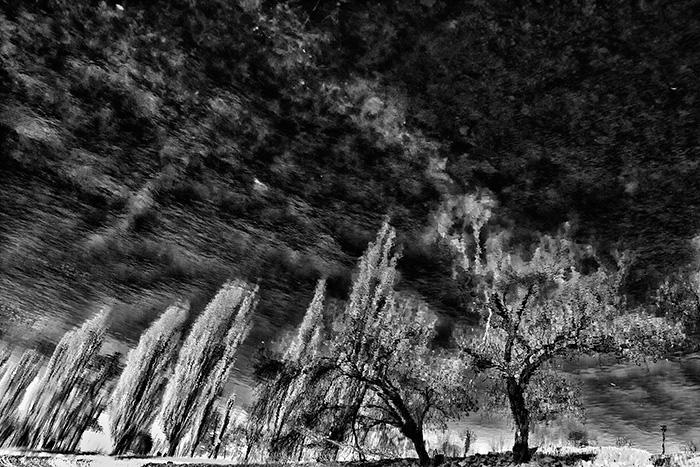 elmosódott fák