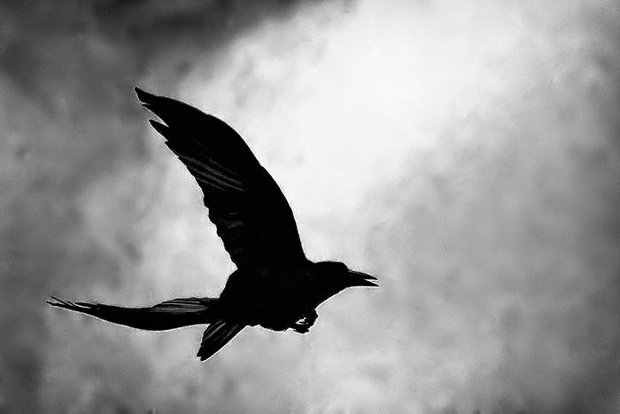 repülő varjú