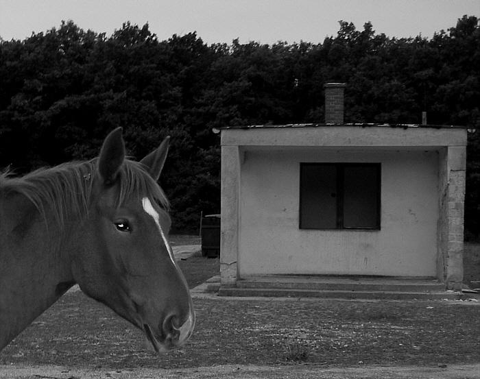 A magányos ló