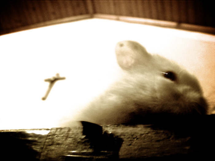 Buffer the Hamster
