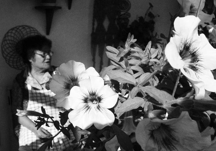 Virágok mögött