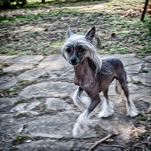 kutya-balett