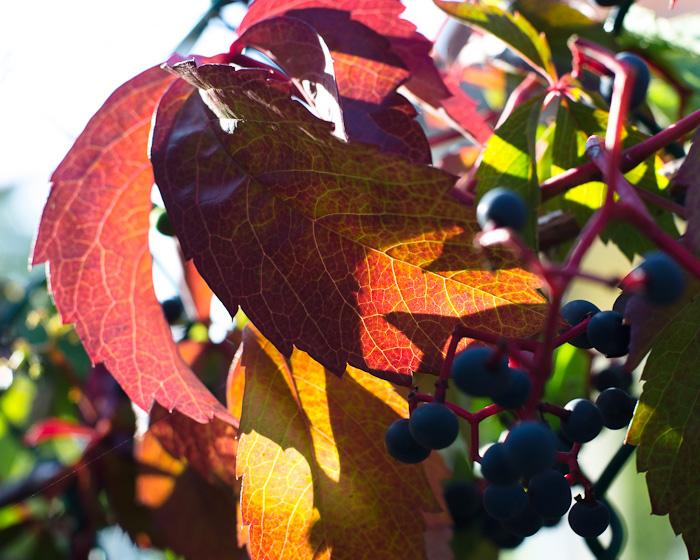 Az ősz árnyalatai