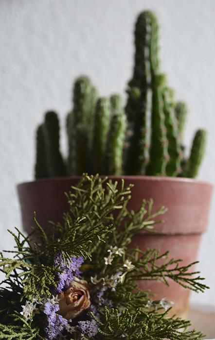Kaktusszal