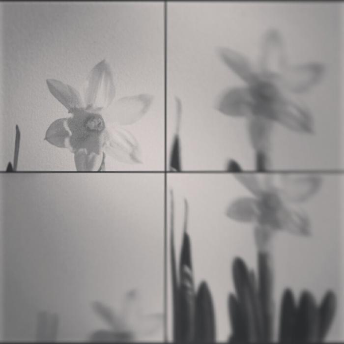 anya virága