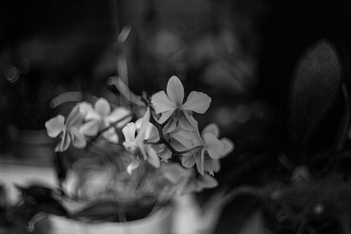 Fehér orchideák