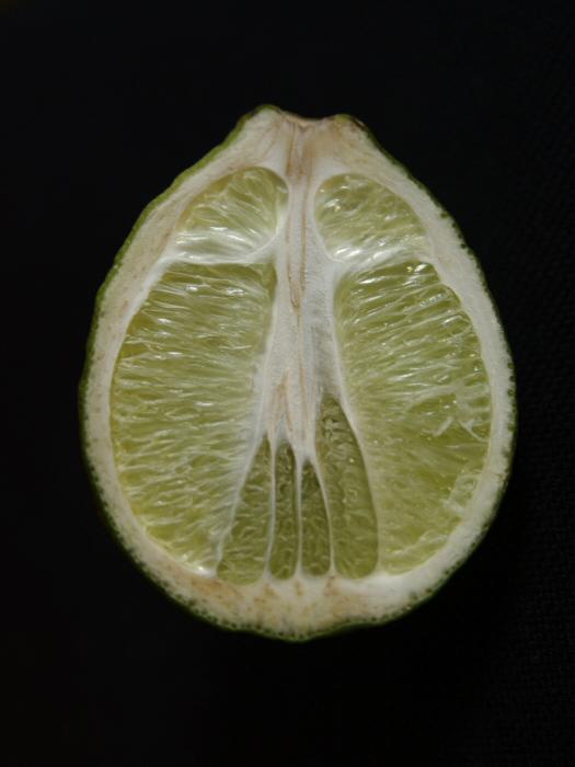 Lemonardo