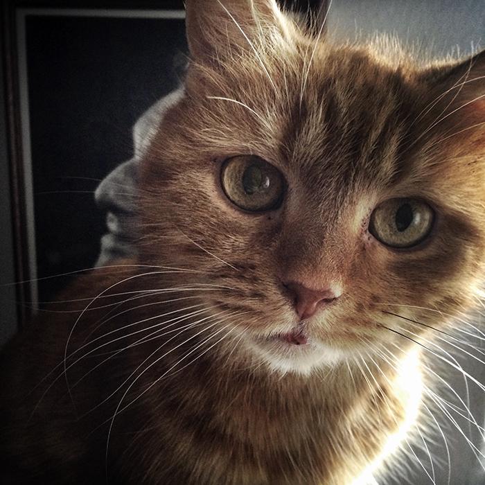 Bernstein macskája