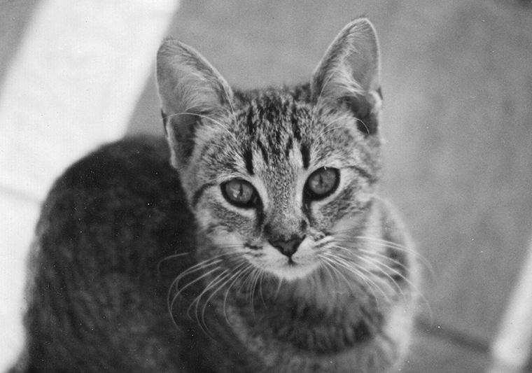 Macsek #2