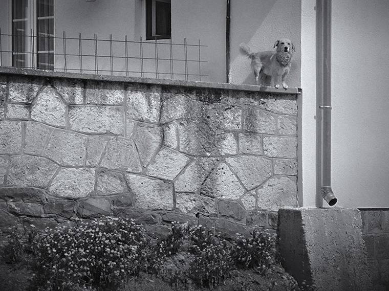 Hegyi Zsolt-2014.03.15. 11:28