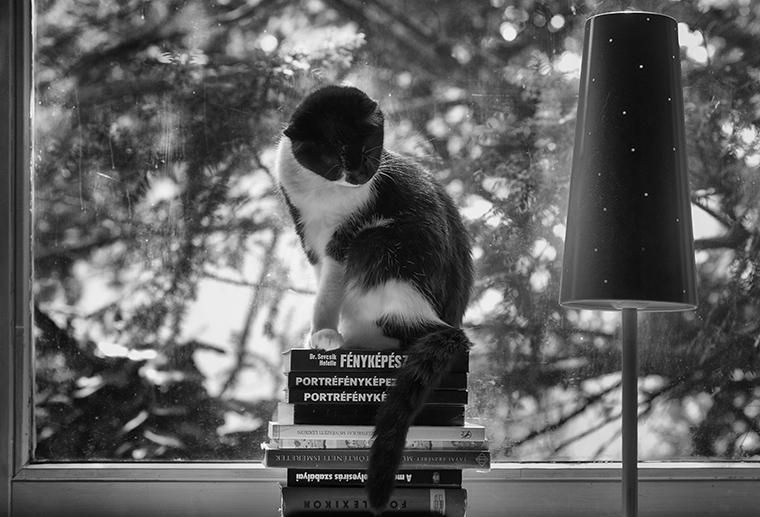 Tanulmány macskával