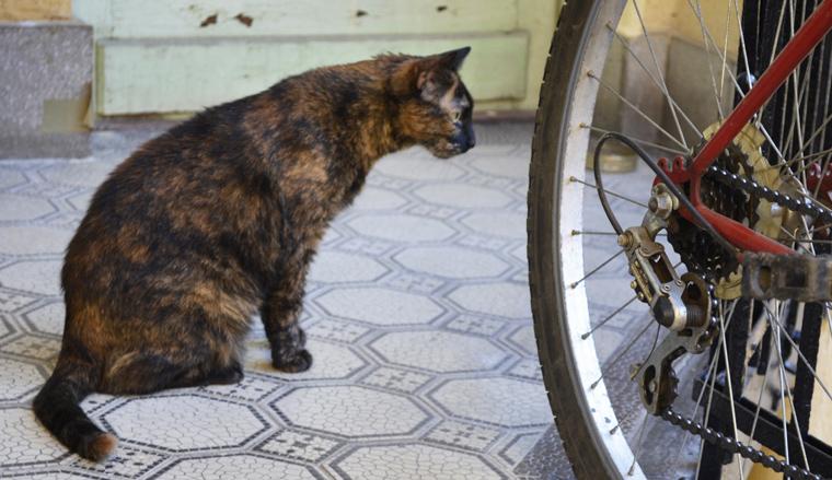 Macska és bicikli