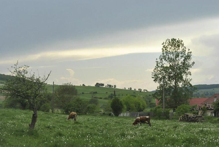 Nyár falun