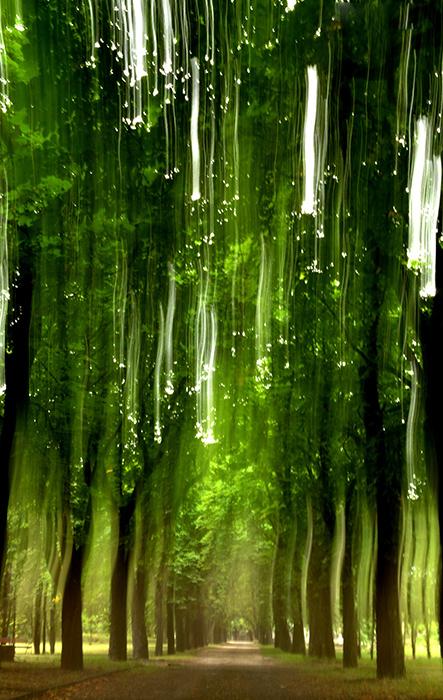 ahol a fák az égig érnek