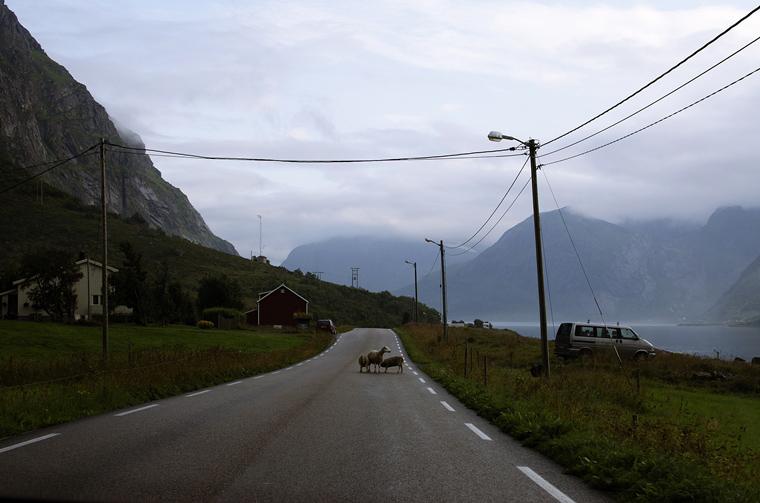 norvég zsáner