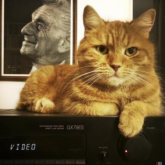 Video Cat