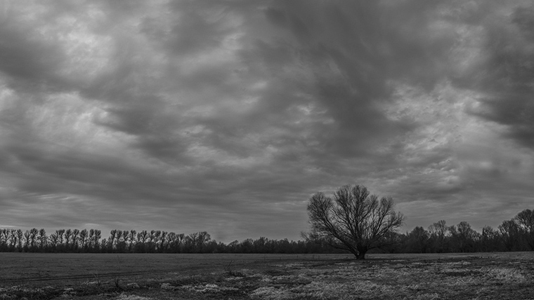 A magányos fa