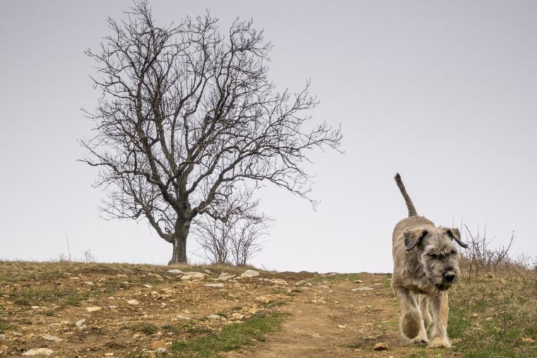 Egy fa és egy kutya