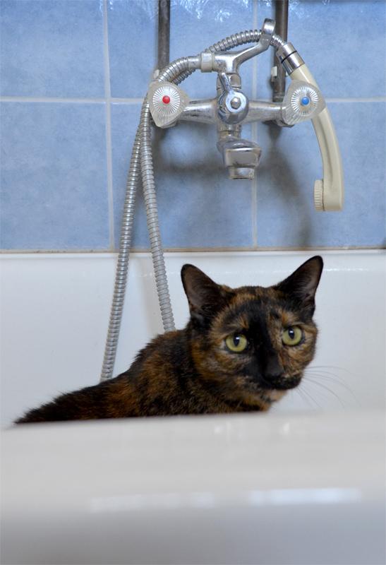 Macskafürdő