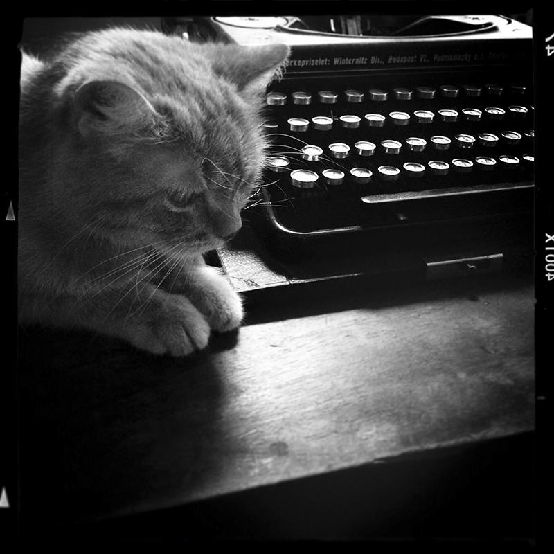 Macska írógéppel