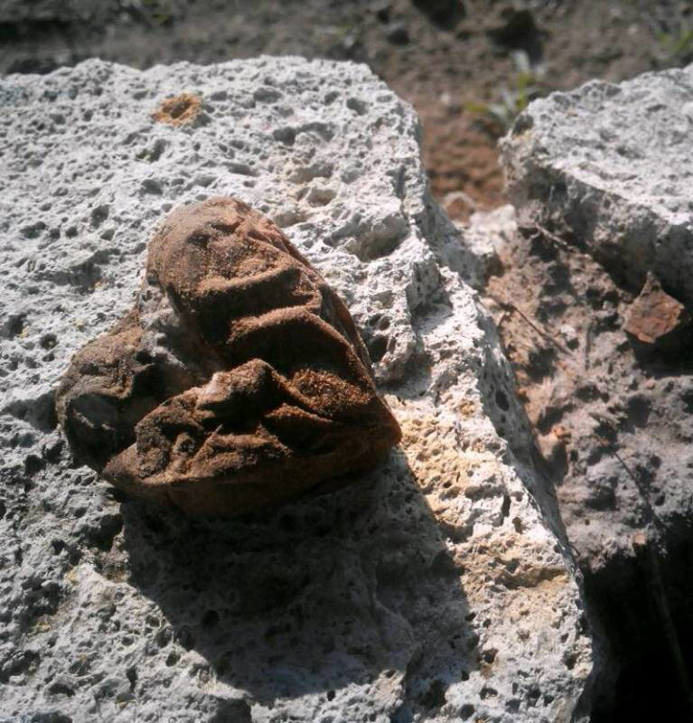 365/2 - kő krumpè