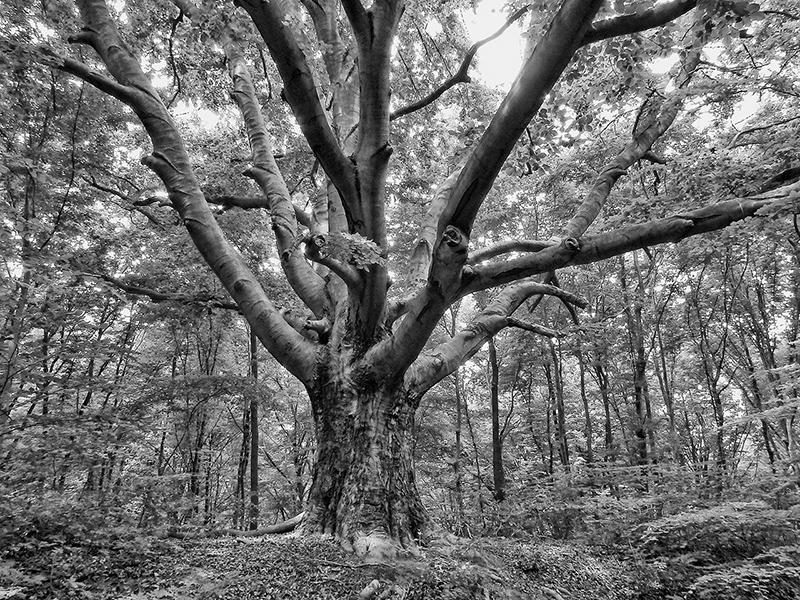 365/20 - Csak egy fa
