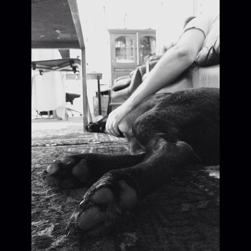 PAZ365/5 - Ember és állat
