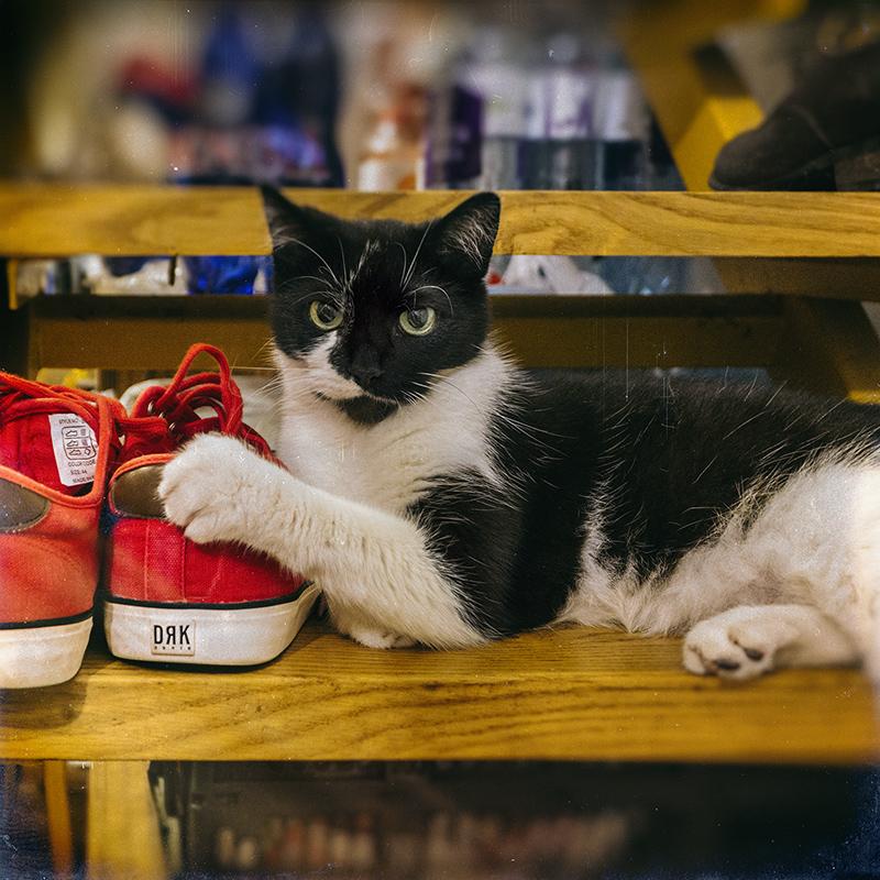 Dorko, a macskám is azt szereti