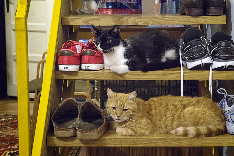 Berci, Szöszi és a cipők