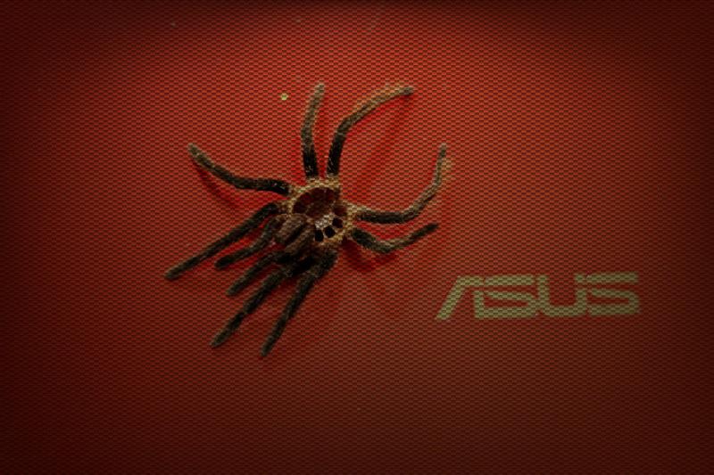 Tarantulánk megunt rucija (40.365)