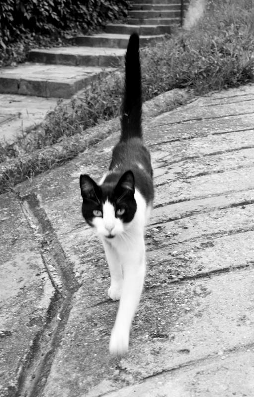 Csaba utcai macska