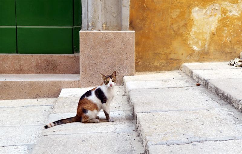 Vallettai foltos