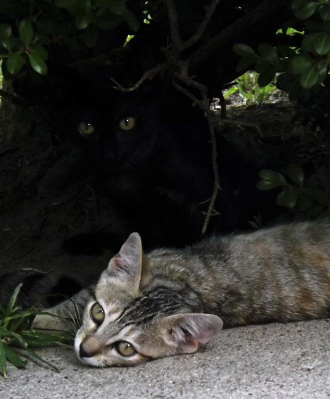 365/53 Két macska (Valójában három)