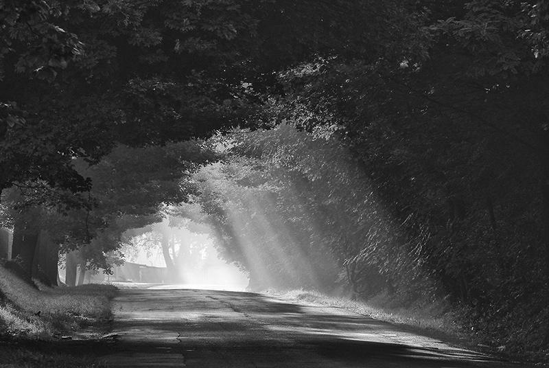 365/89 - morning lights