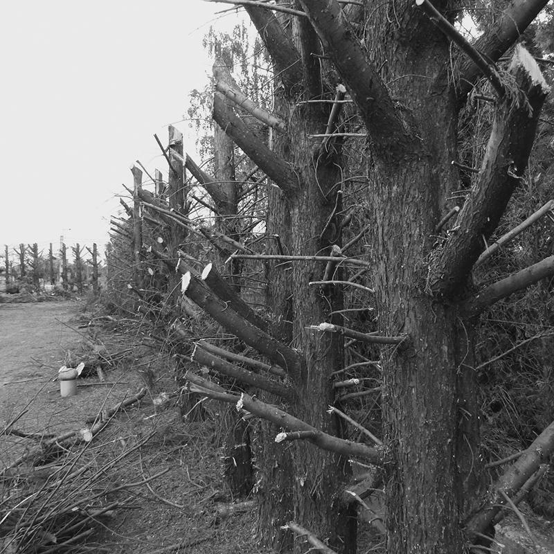 365/114 - a favágó kerítése