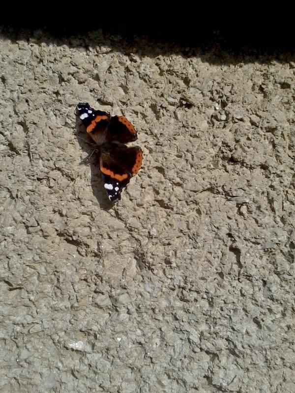 Frantisek Balga - Pillangó
