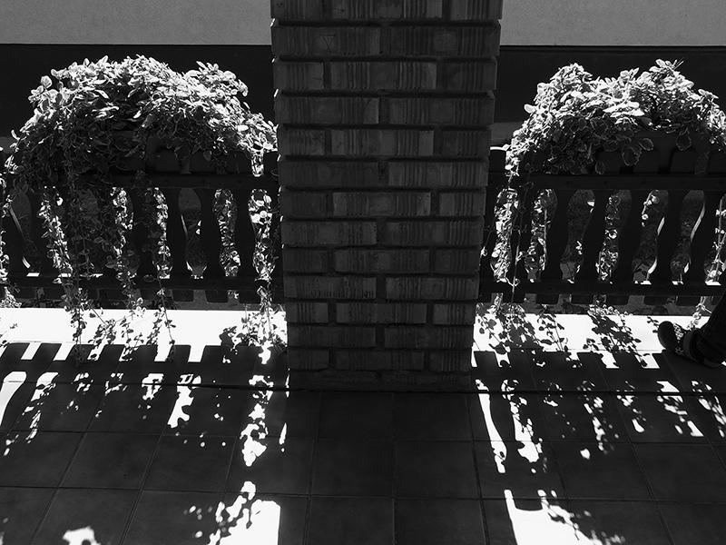365/126 - árnyékvirág