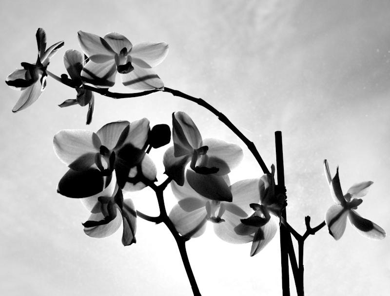 Orchideális attrakció
