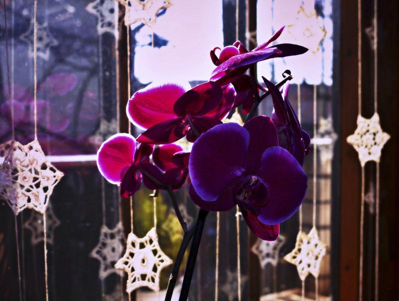 365/283 - Orchidea