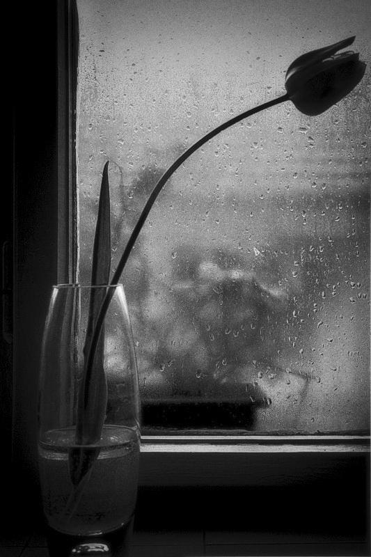 365/332 - Tulipán az ablakban