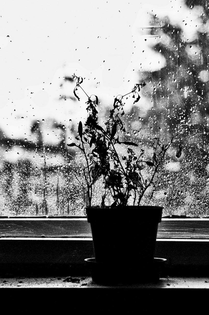 Sziluett az esőben