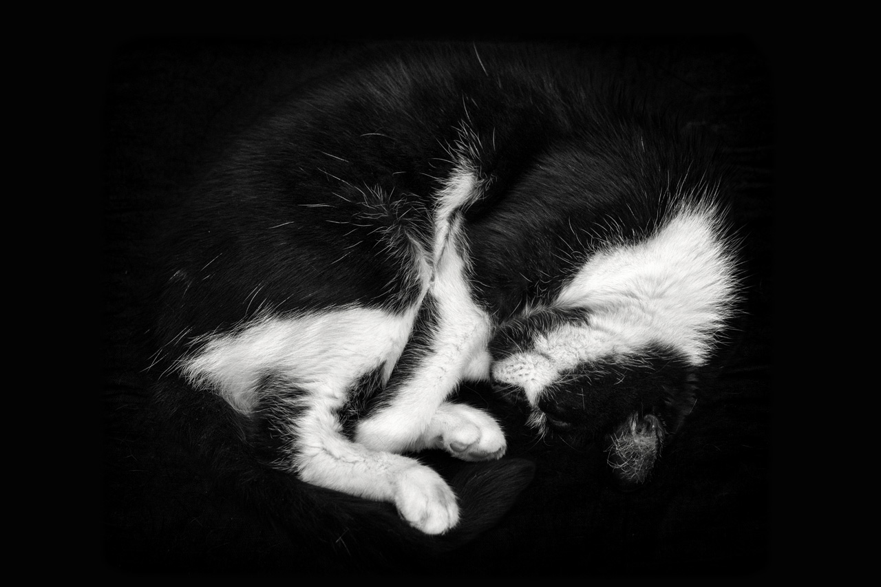 365/47 - Álmomban egy macska