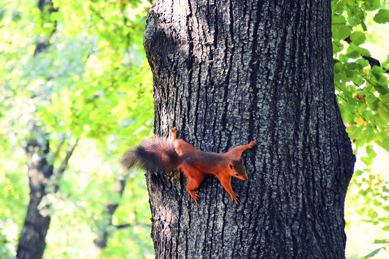 Mint a mókus