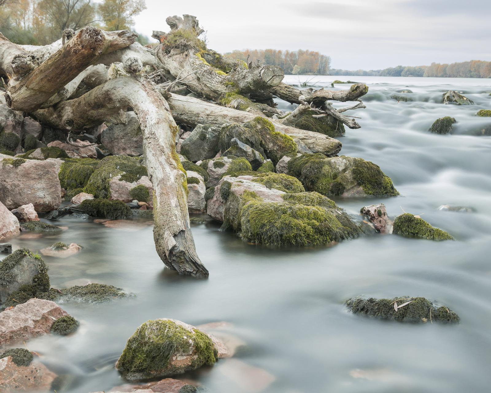 száraz fa és moha