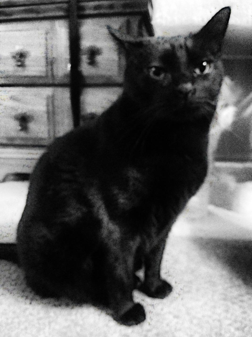 171/365 Fekete macska élei